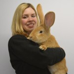 Giant Continental Rabbit Needs New Home