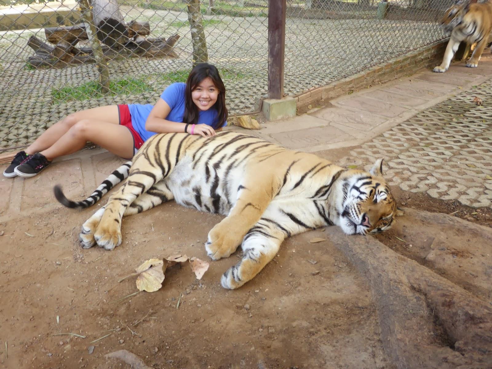 Фото огромных львов с тиграми 3