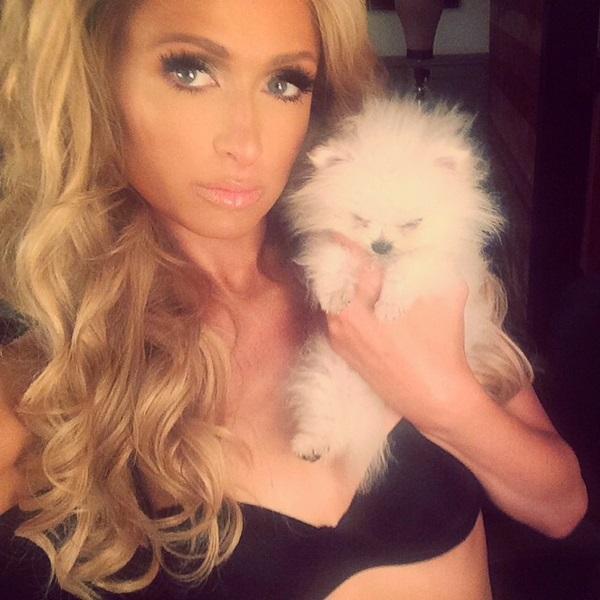 Paris Hilton Pomeranian Dog