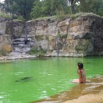 Woman In Seal Pool: Bikini-clad Lady Sneaks Into Seal Pool For Pics